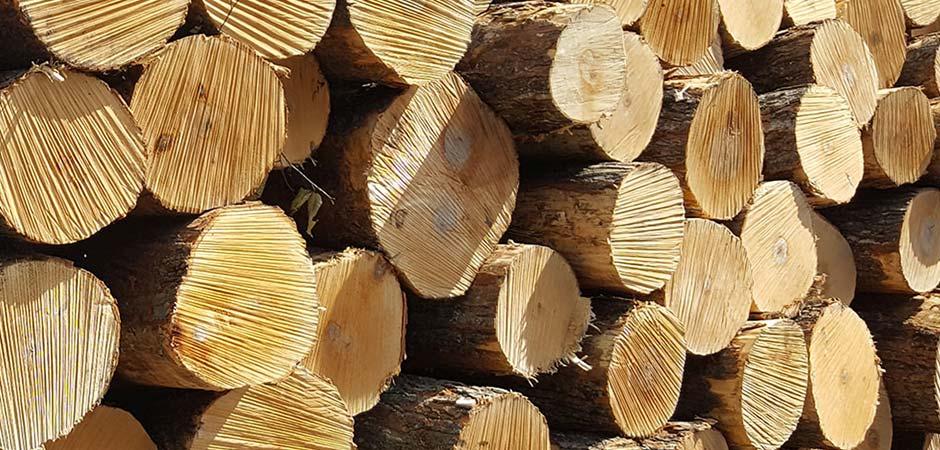 Paki-plus-radnja-za-uzgoj-i-iskorišćavanje-šuma