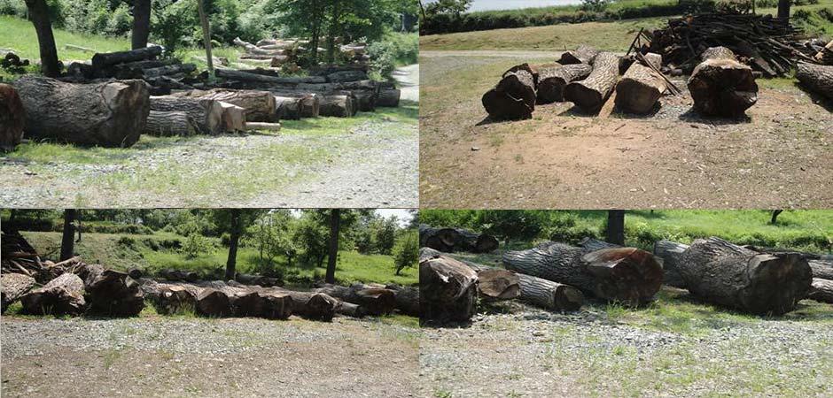 Timber-Trade-DOO